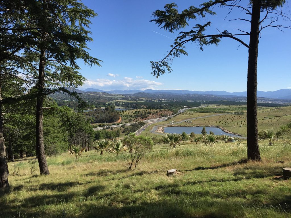 Looking out at lovely Canberra from the arboretum.